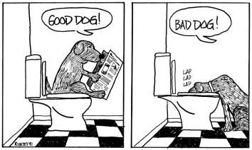 toilet dog