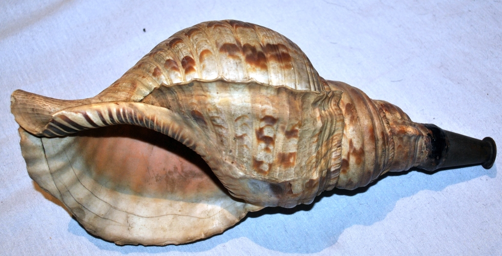 antique_japanese_horagi_conch_shell_trumpet