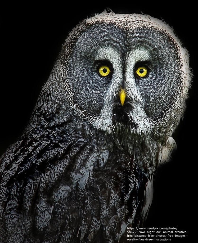 owl-1275027_1280